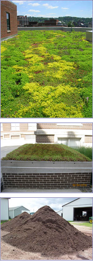 A green vegetated roof system